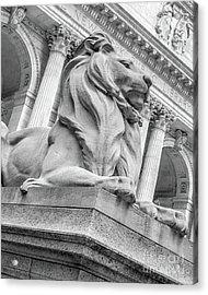 Lion Statue New York Public Library Acrylic Print by Edward Fielding