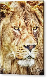 Lion-the King Of The Jungle Large Canvas Art, Canvas Print, Large Art, Large Wall Decor, Home Decor Acrylic Print