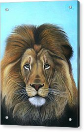 Lion - The Majesty Acrylic Print