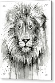 Lion Watercolor  Acrylic Print by Olga Shvartsur