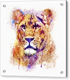 Lioness Head Acrylic Print