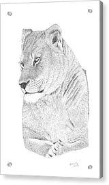 Lioness Acrylic Print by Patricia Hiltz