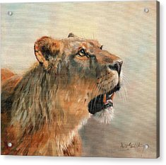 Acrylic Print featuring the painting Lioness Portrait 2 by David Stribbling