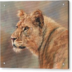 Acrylic Print featuring the painting Lioness Portrait by David Stribbling