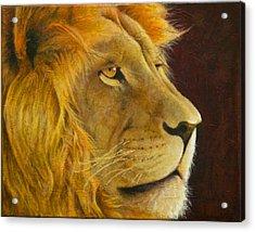 Lion's Gaze Acrylic Print