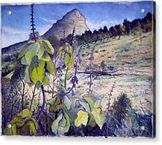 Lions Head From Signal Hill Cape Town  South Africa 2006  Acrylic Print by Enver Larney
