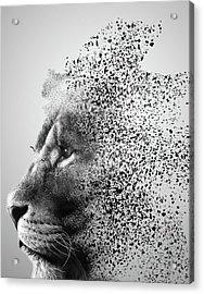 Lions Mind Acrylic Print