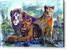 Lion's Play Acrylic Print