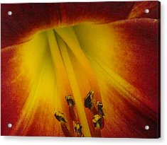 Lip Of The Lily Acrylic Print by Ward Smith