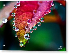 Liquid Beads Acrylic Print by Christopher Holmes