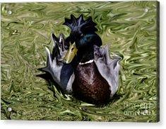 Liquid Mallard Acrylic Print