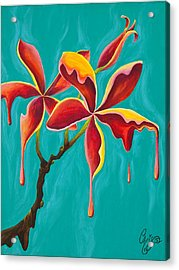 Liquidia Plumeria Acrylic Print by Chris  Fifty-one