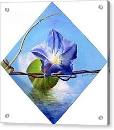 Liseron Acrylic Print by Muriel Dolemieux