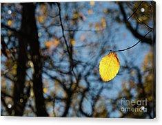 Acrylic Print featuring the photograph Lit Lone Leaf by Kennerth and Birgitta Kullman