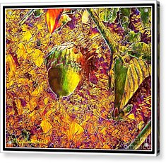 Little Acorn Acrylic Print by MaryLee Parker