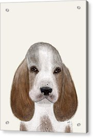 Acrylic Print featuring the painting Little Basset Hound by Bri B