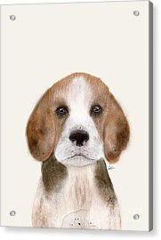 Acrylic Print featuring the painting Little Beagle by Bri B