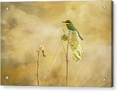 Little Bee-eater Acrylic Print by Kathy Adams Clark