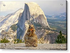 Little, Big Squirrel Acrylic Print