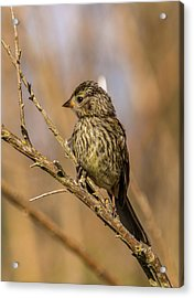 Little Bird On Little Branch Acrylic Print