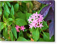 Little Bit Of Love Acrylic Print by Jan Amiss Photography