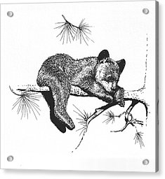 Little Black Bear Cub Acrylic Print