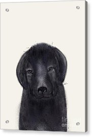 Acrylic Print featuring the painting Little Black Labrador by Bri B
