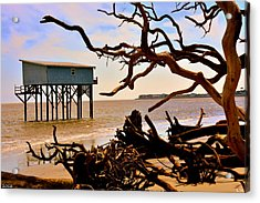 Little Blue Hunting Island State Park Beaufort Sc Acrylic Print