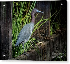 Acrylic Print featuring the photograph Little Blue Under Bridge by Robert Frederick