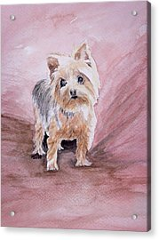 Little Boss Acrylic Print by Pam Hurst
