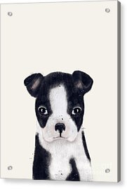 Acrylic Print featuring the painting Little Boston Terrier by Bri B