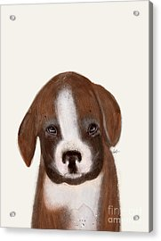 Acrylic Print featuring the painting Little Boxer by Bri B