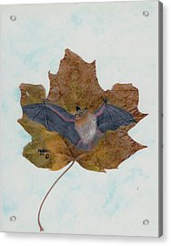 Little Brown Bat Acrylic Print