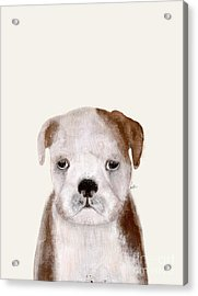 Acrylic Print featuring the painting Little Bulldog by Bri B