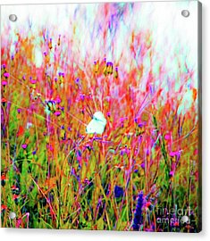 Acrylic Print featuring the photograph Little Butterfly Fly by D Davila