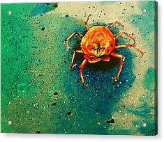 Little Crab Acrylic Print by Heather  Gillmer