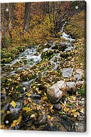 Little Creek Acrylic Print