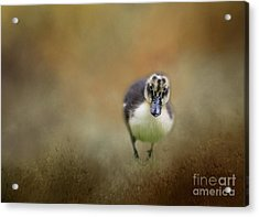 Acrylic Print featuring the photograph Little Cutie by Eva Lechner