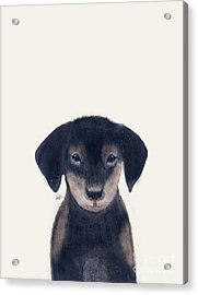 Acrylic Print featuring the painting Little Dachshund by Bri B