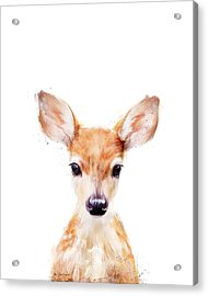 Little Deer Acrylic Print
