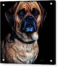 Little Dog Big Heart Acrylic Print