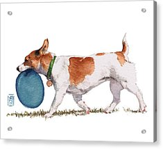 Little Dog With Blue Frisbee Acrylic Print by Debra Jones