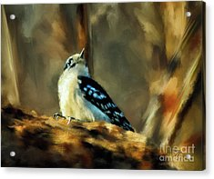 Little Downy Woodpecker In The Woods Acrylic Print