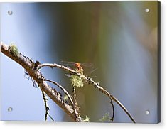Little Dragonfly Acrylic Print by Gary Smith