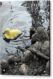 Little Ducky 2 Acrylic Print by Angelina Vick