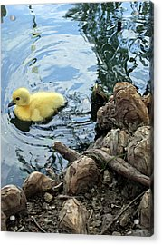 Little Ducky Acrylic Print