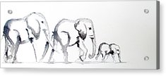 Little Elephant Family Acrylic Print