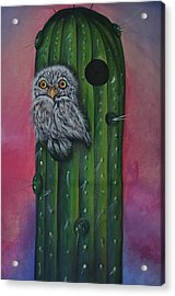 Little Elf Owl Acrylic Print