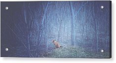 Little Fox In The Woods Acrylic Print