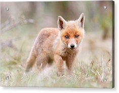 Little Fox Kit, Big World Acrylic Print by Roeselien Raimond